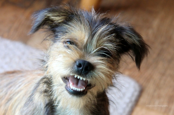Laughing Pup