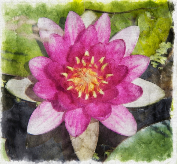 Water Lily - Pastel Oil Watercolor