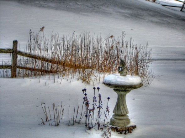 Bird Bath In Winter