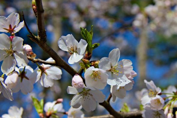 Spring Returns!