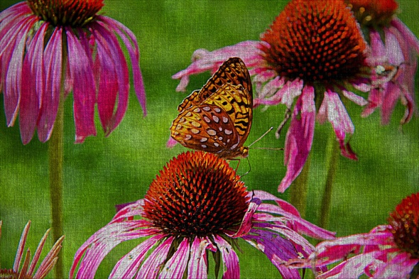 Butterfly and Cone Flowers On Canvas